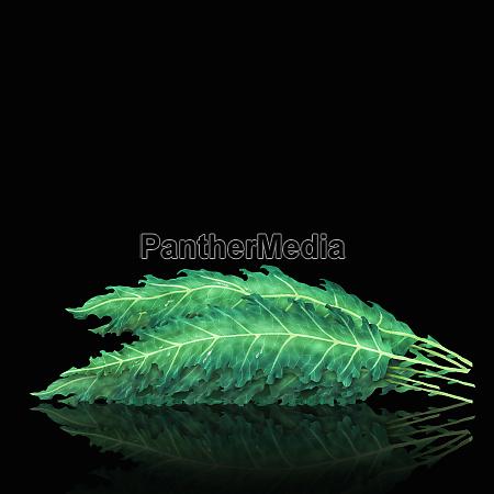 pila de hojas de col rizada