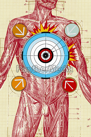 arrows and bulls eye over male