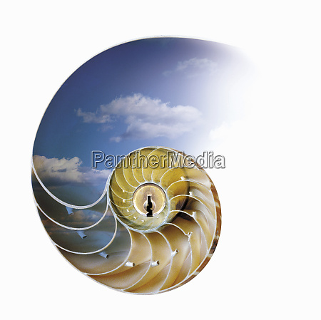 nautilus with keyhole in center