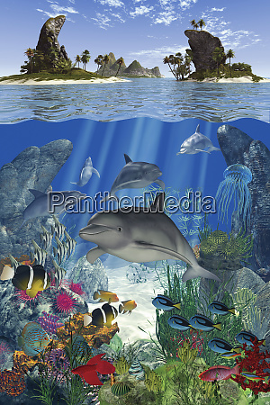 dolphin and fish swimming underwater in