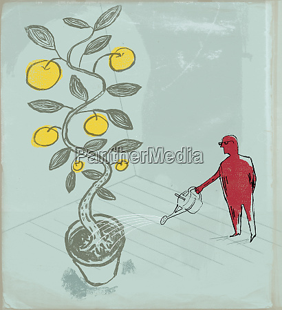 man watering large potted fruit tree