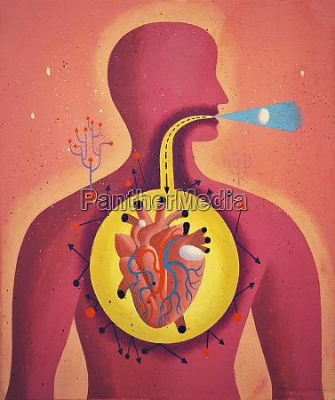 digestive tract directly from mouth to