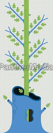 sapling growing inside dead tree