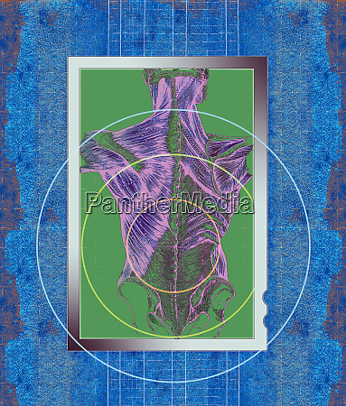 target over anatomical diagram of human