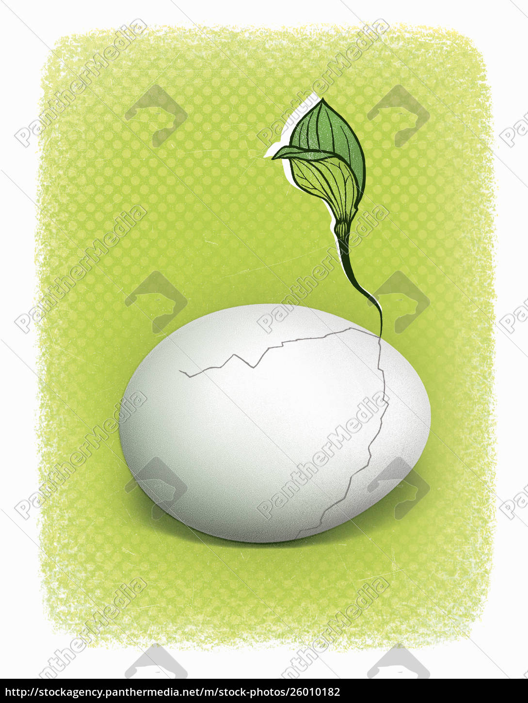 seedling, growing, from, cracked, egg - 26010182