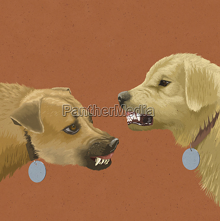 two dogs face to face snarling