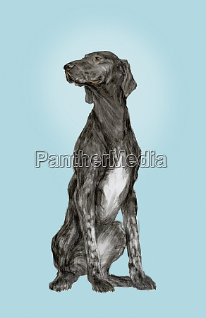 portrait of pointer dog