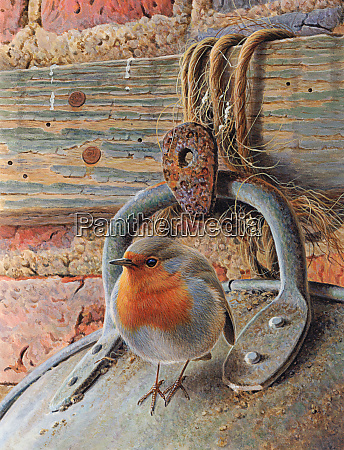 robin perching on metal bucket
