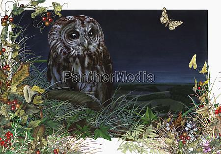 tawny owl strix aluco in foliage