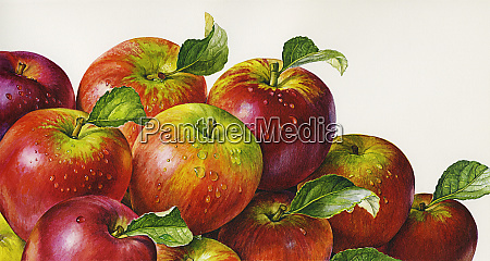 close up of pile of apples