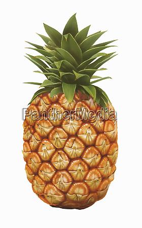 single whole pineapple