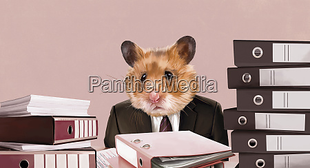 hamster businessman sitting at desk with