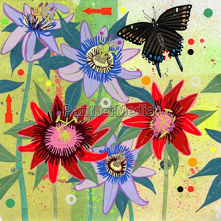 black swallowtail butterfly and passion flowers