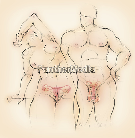 naked man and woman showing male