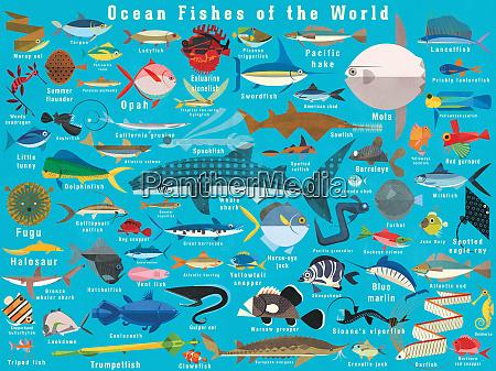 illustration of lots of ocean fish