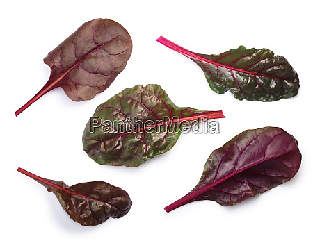 chard silverbeet mangold leaves top view