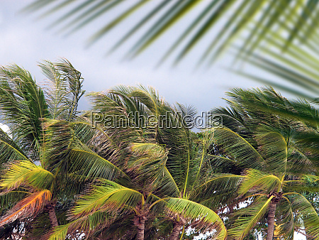 group of close up tall palm
