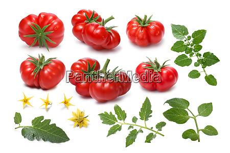 set of ripe heirloom tomatoes togorific