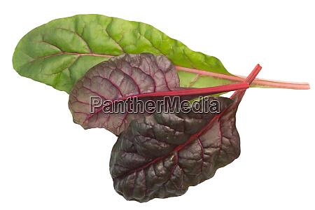 chard mangold beta vulgaris leaves top
