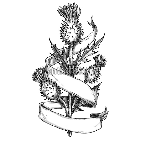 scottish thistle with ribbon sketch