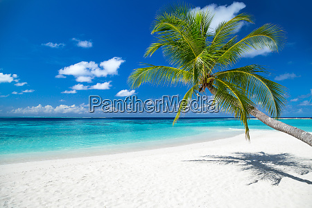 tropical paradise beach background