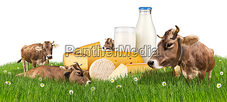 cows with milk bottle and cheese