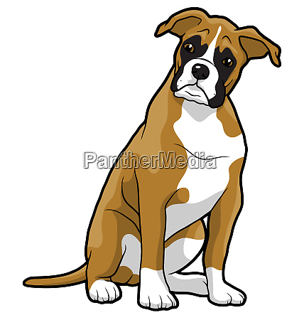 boxer puppy animal pet mascot breed
