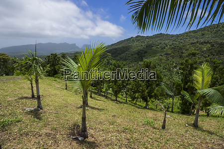 mauritius island tropics