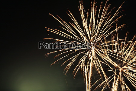 firework flower in front of black