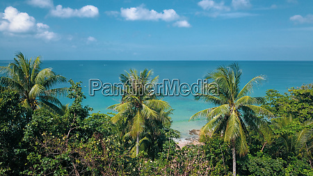 looking through tropical tree leaves at