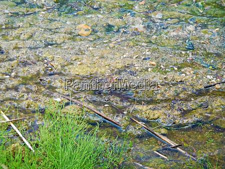 debris collecting along a lake shore