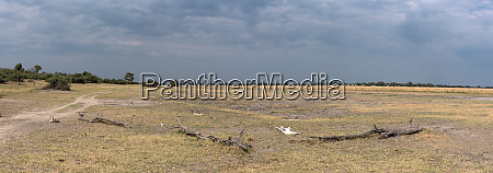 the landscape on the chobe river