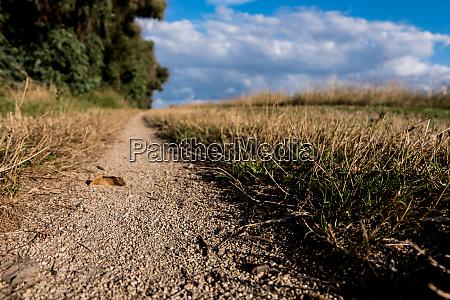 trekking sandstone path