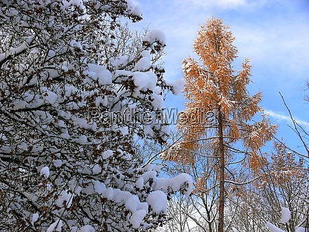 winter forest after heavy snowfall 2
