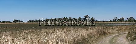landscape of the dried up okavango