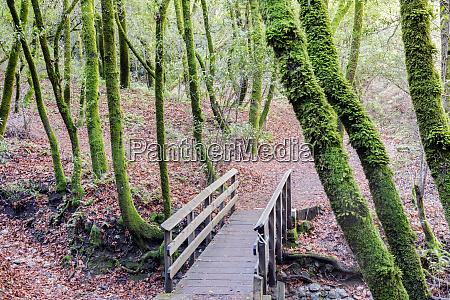 footbridge in california bay laurel forest