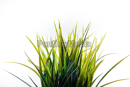 artificial grass plastic green light isolated