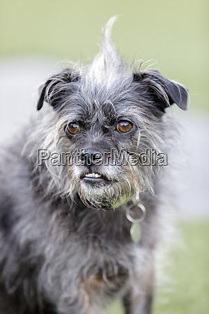 terrier mix dog portrait