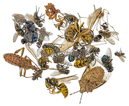 many different dead insects are in