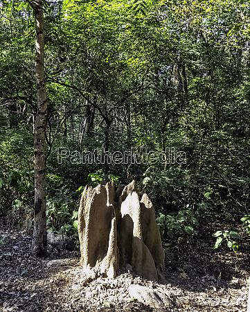 termite mound inside the jungle