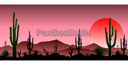red stony desert cacti sunset