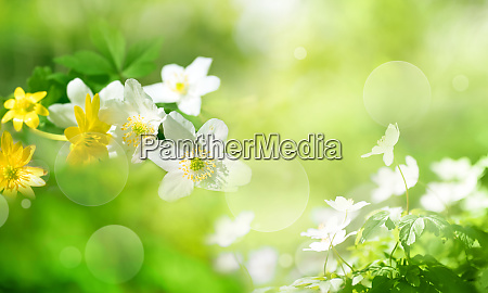 flowers in spring on sunny green