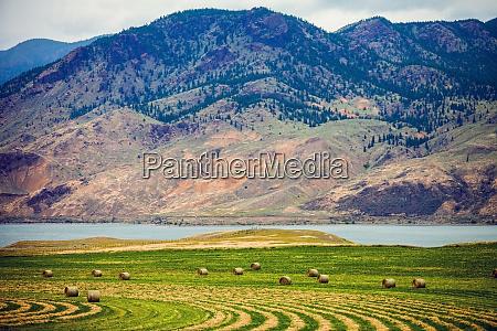 hay bales in a meadow near
