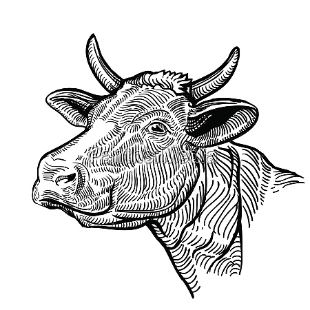 cow head in a graphic style