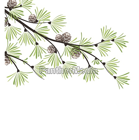 decoration of pine branches