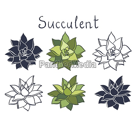 set succulent plant in the desert