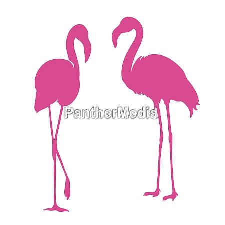 flamingo exotic bird two pink flamingo