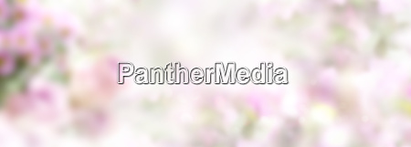 tender pink spring background