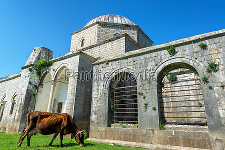 lead mosque in shkoder albania