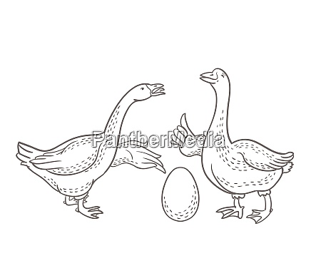 two geese goose egg outline drawing